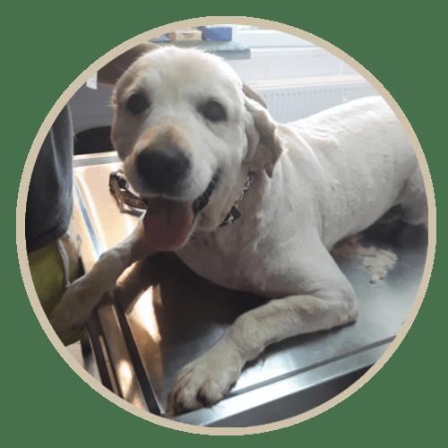 human pet story kira
