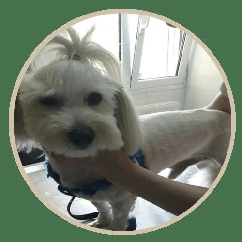 human pet story ozzy