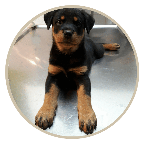 human pet story angie