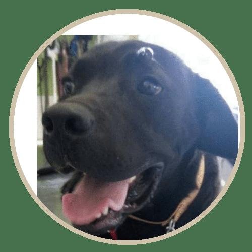 human pet story roy