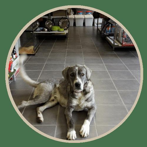 human pet story mr grey