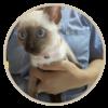 human pet story 8