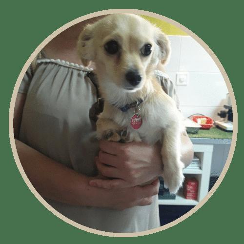 human pet story mpella