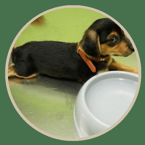 human pet story kouki