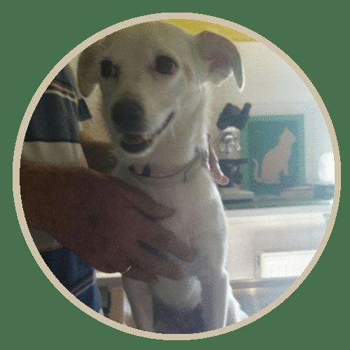 human pet story ntona