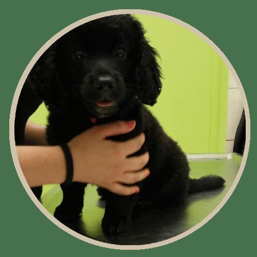 human pet story blacky