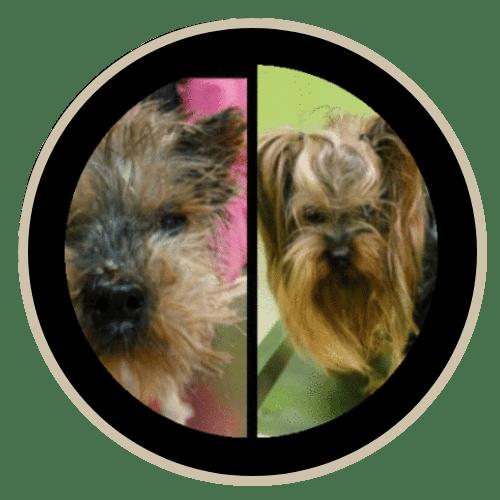 human pet story paco