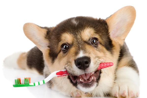 Τα δόντια του σκύλου και της γάτας
