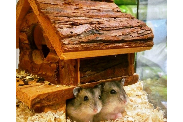 arhtro hamster