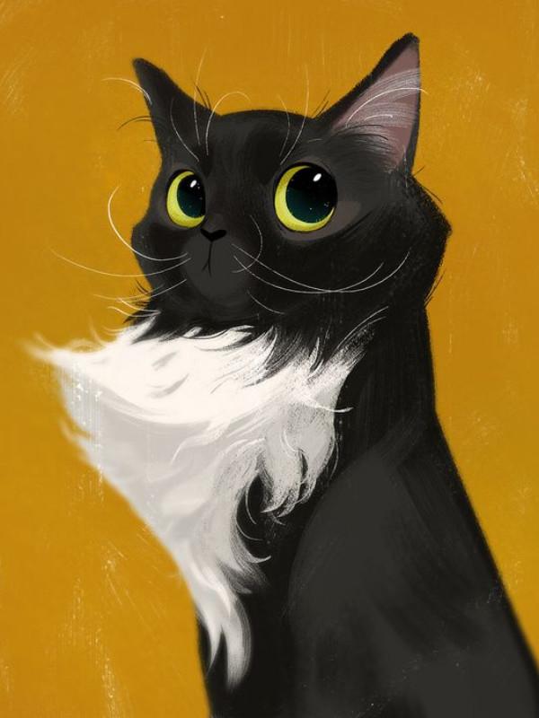 γατα αξεσουαρ