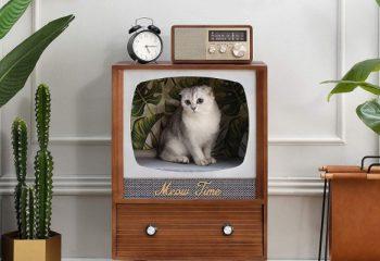 5 + 1 ταινίες με τις αγαπημένες σας γάτες!