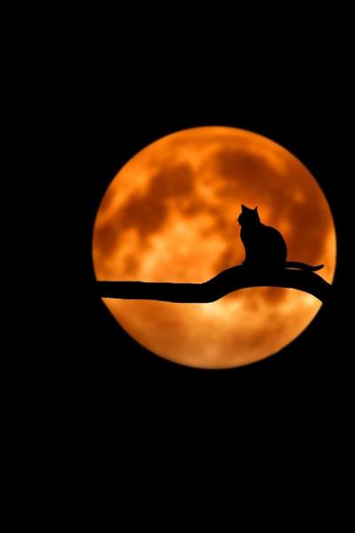 Ένα Αυγουστιάτικο φεγγάρι